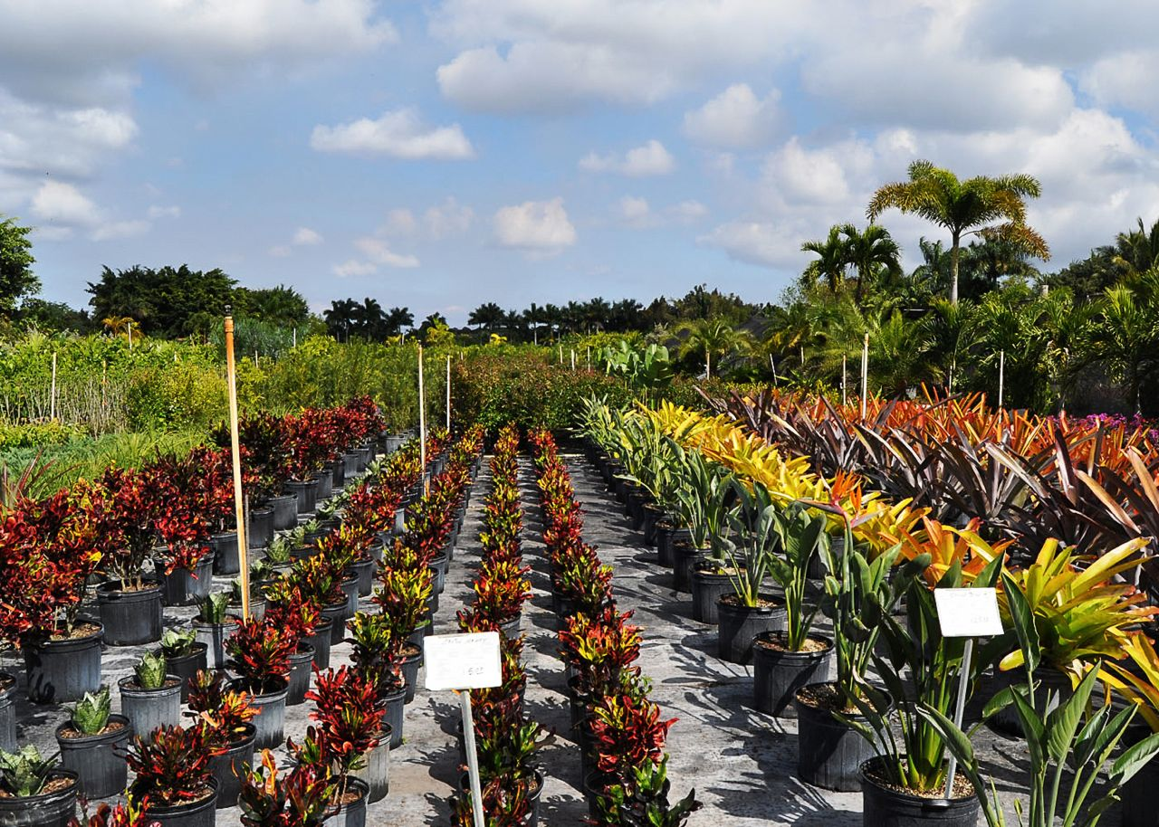 We Welcome You To Our Home And Garden Center In Southwest Ranches Florida Offer A Large Variety Of Whole Priced Landscape Supplies For Your